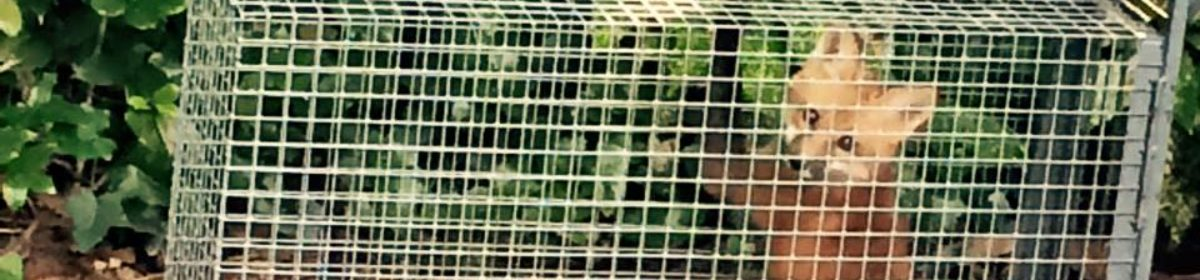 Nael-Voyance Animal Control